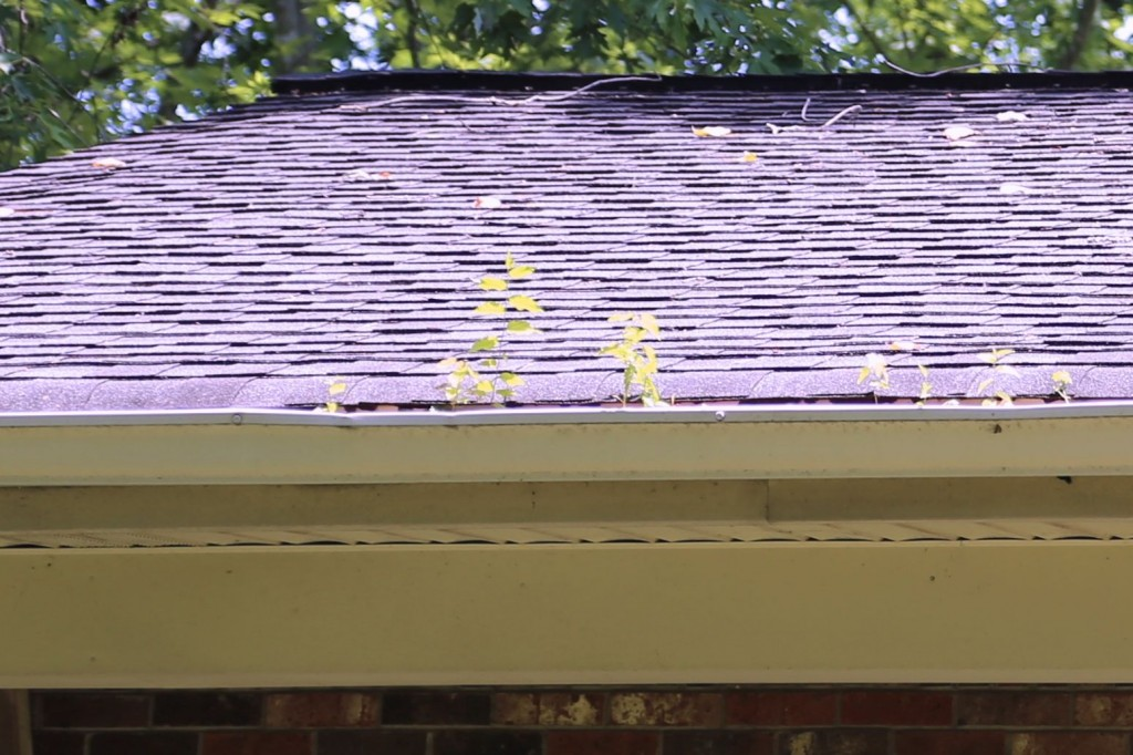 Here we can see what the early stages of gutter displacement look like: baby trees and all.